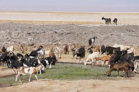 12. Januar: Atacama Wüste - Süden