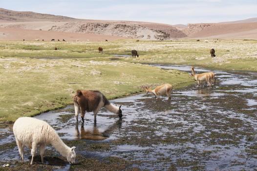 13. Januar: Atacama Wüste - Erkundungstour Nord