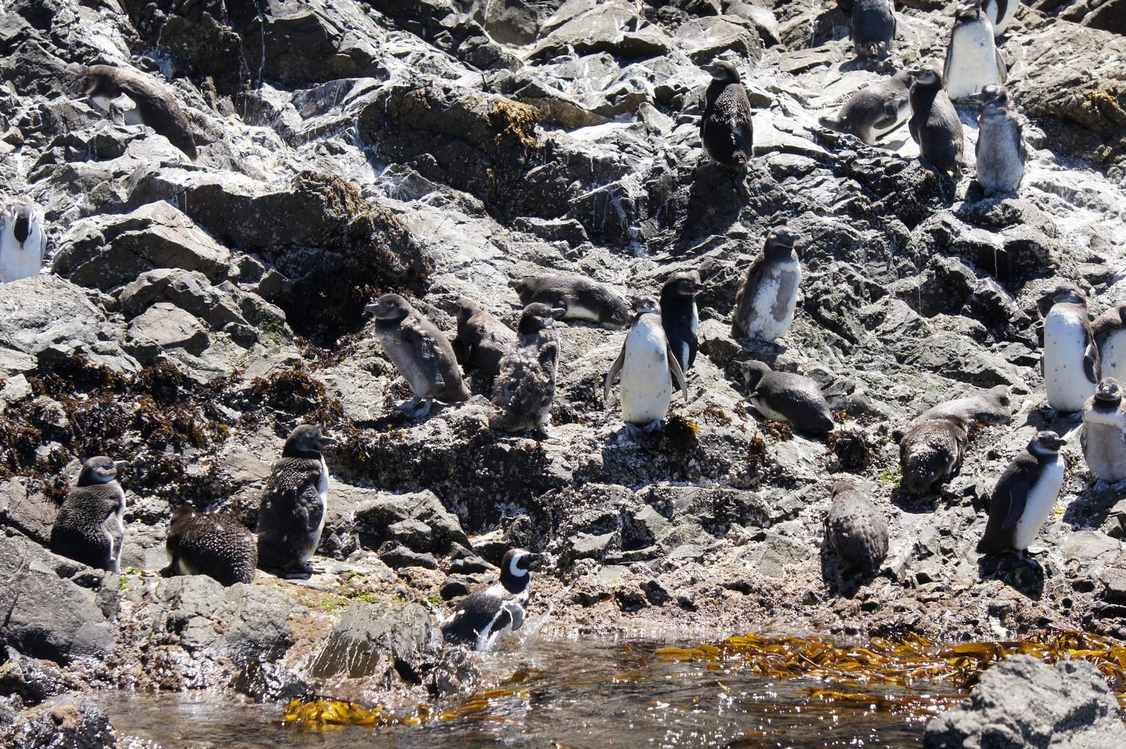 15. Januar - Besuch der Insel Chileo