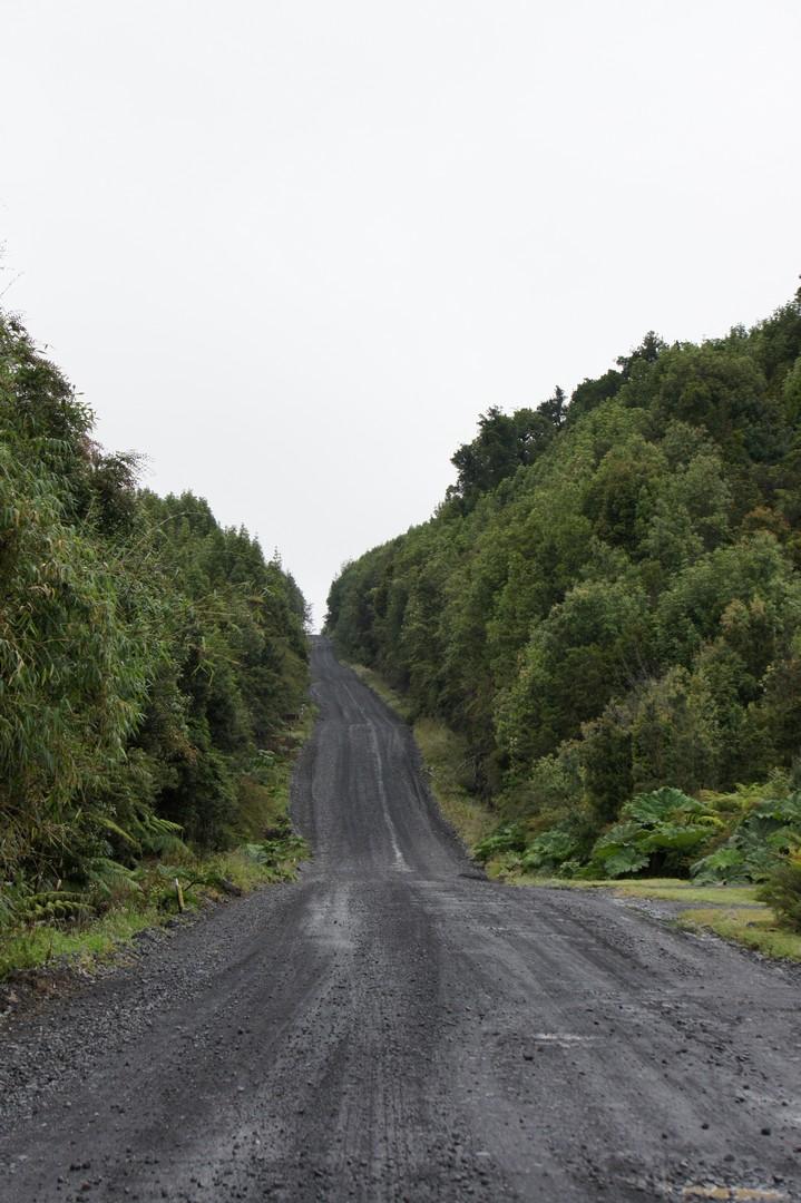 Schotterpiste durch den Pumalin Park