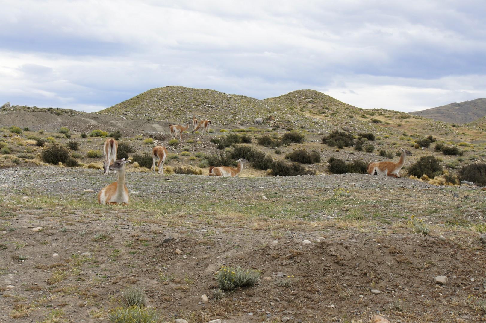 25. Januar - Wieder nach Chile