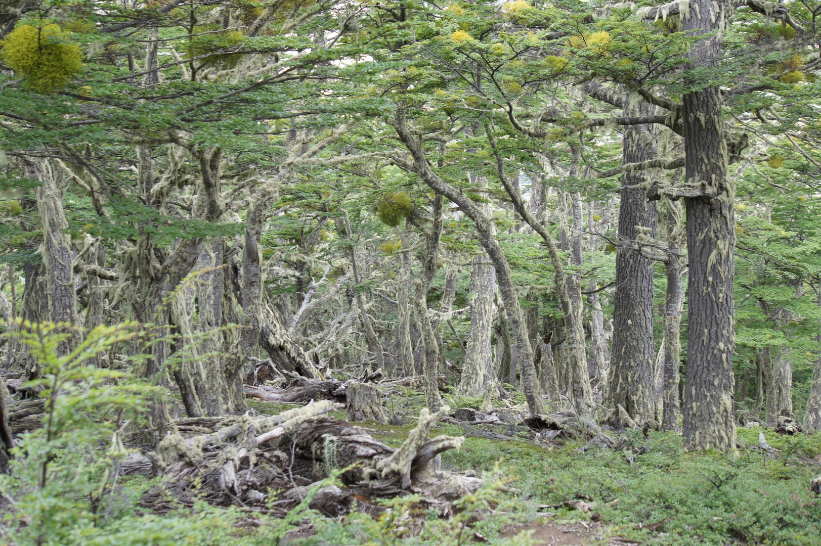 27. Januar - Nach Puerto Natales