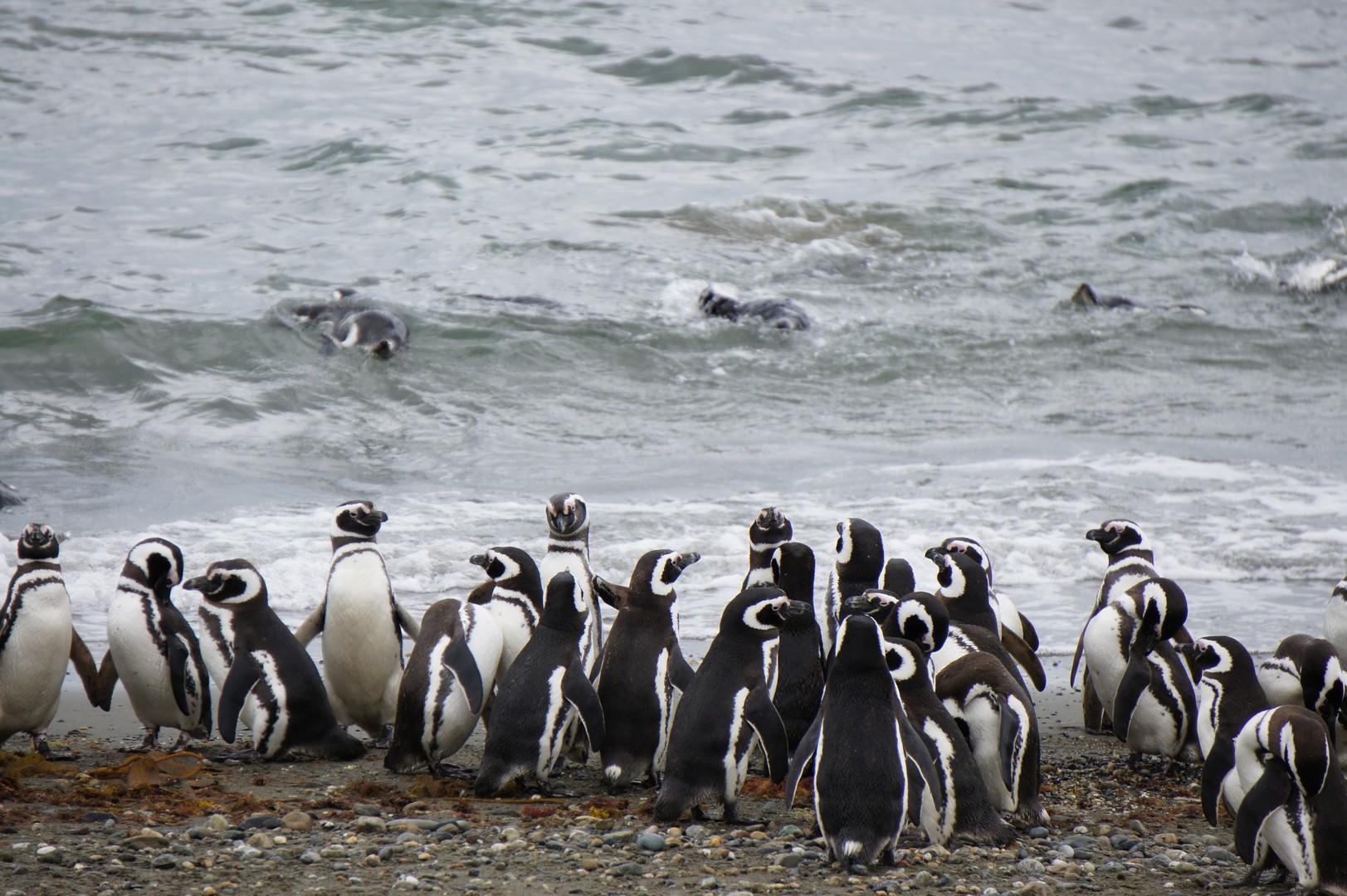 28. Januar - Punta Arenas