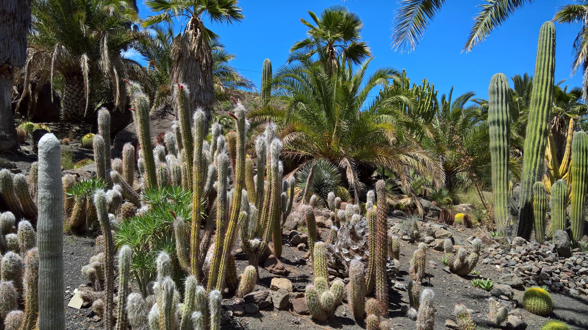 Kaktus... nochmal...